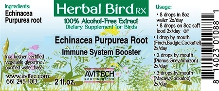 Echinacea Purpurea Root - Immune System Booster - Bird Herbal RX Relaxing