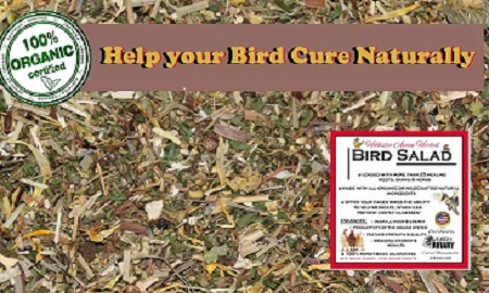 Herb Salad for birds-organic herbal medicine chest for birds